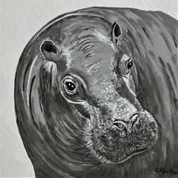 z Hippo