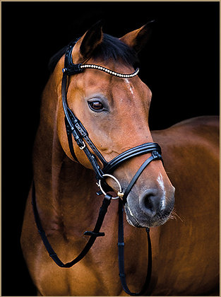Bridon Freedom Magic Tack
