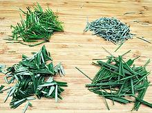 conifer-needles-1024x761.jpg