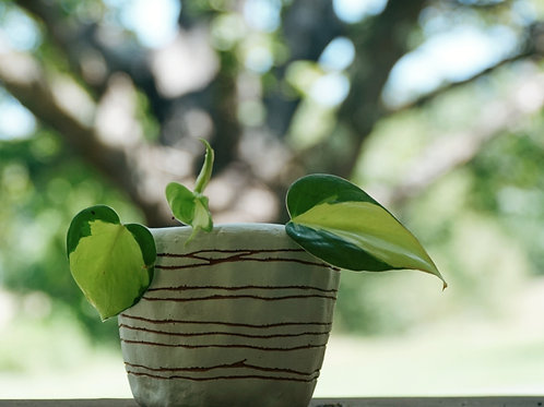 HORIZON - white and terracotta mini planter