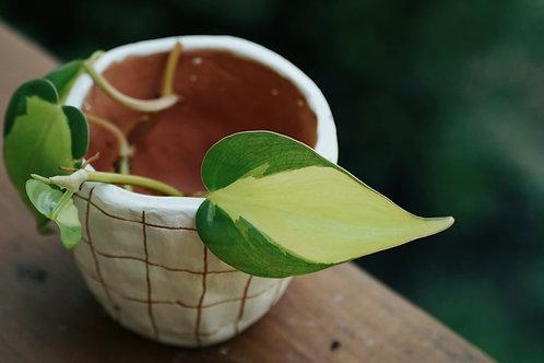 GRID - white and terracotta mini planter
