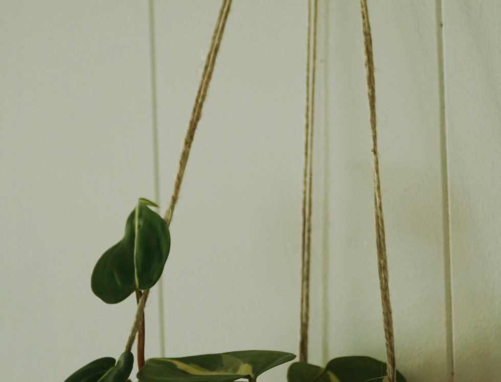 - HORIZON LINES - Pink and White Earthenware Hanging Planter