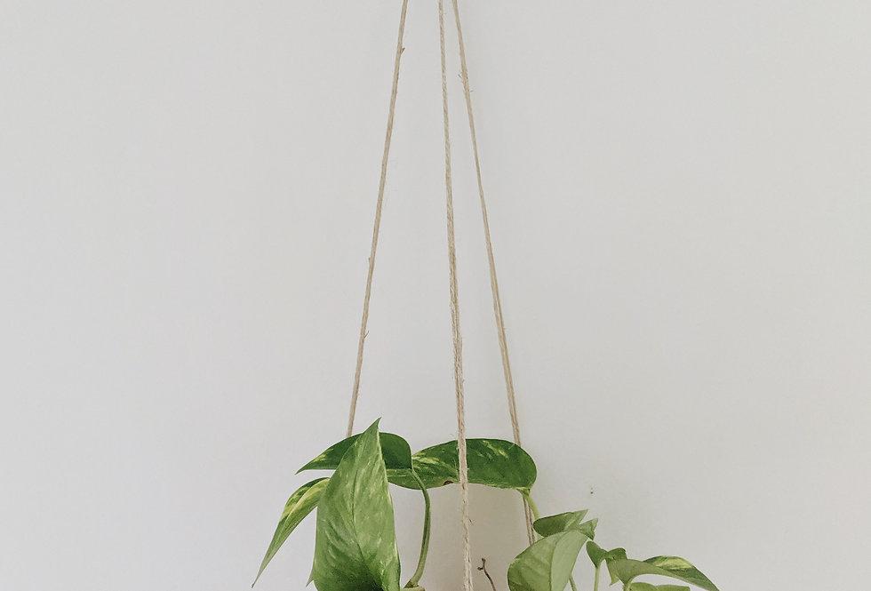 - VERTICAL HORIZON - hanging planter