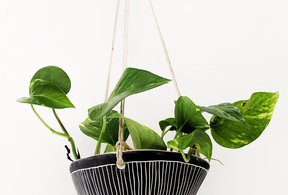 - DIRECTIONAL LINE - hanging planter