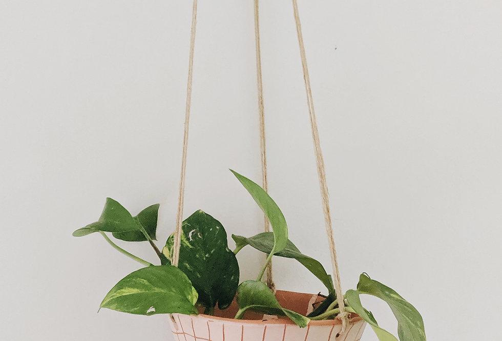 - GRAPH - hanging planter