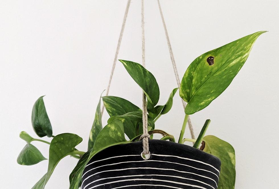 - HORIZON LINE - hanging planter