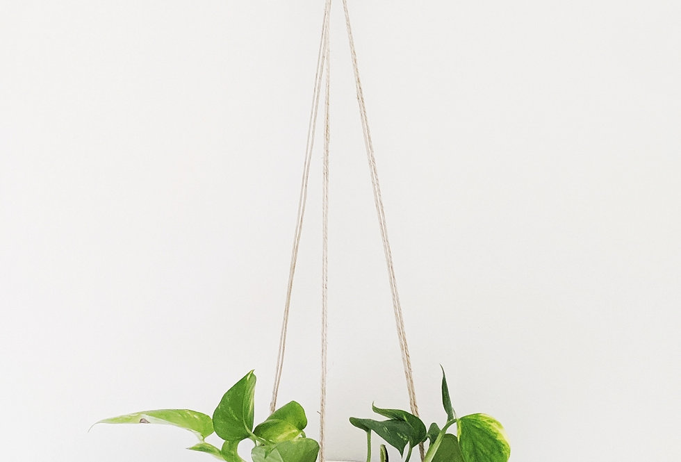 - CURLIQUE - hanging planter