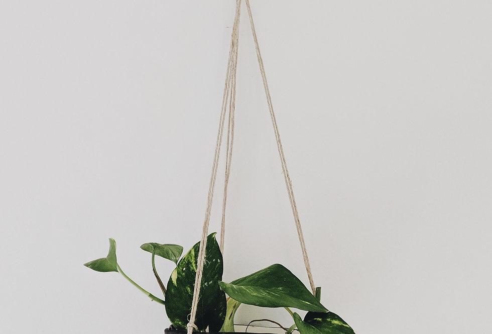 - SERAPHIM - hanging planter