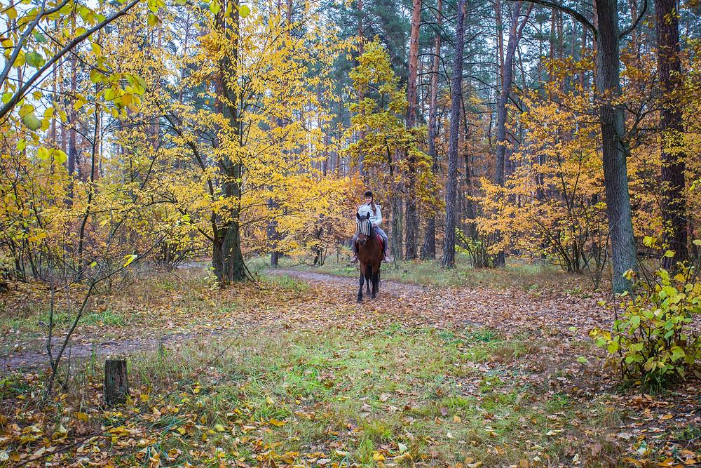 Прогулка на лошадях, сервис романтики Альтечо, Киев