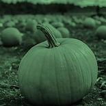 pumpkin_g_sq.jpg