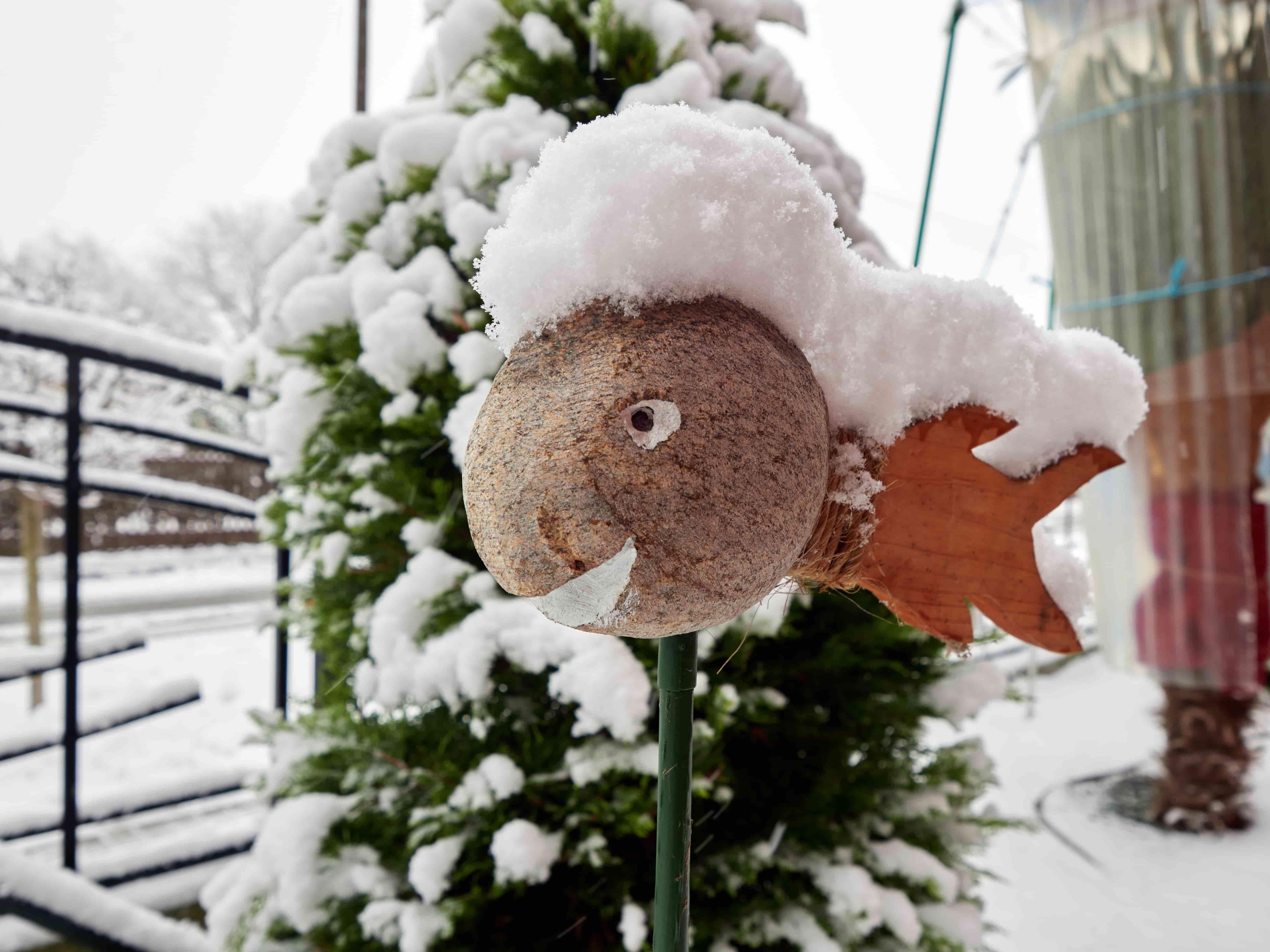 01_2021_LP_Winter_Schnee P1240166