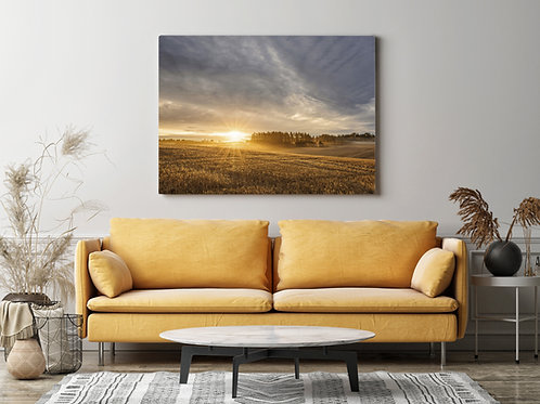 Golden Field Sunrise Canvas