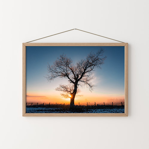 Sunstar Print