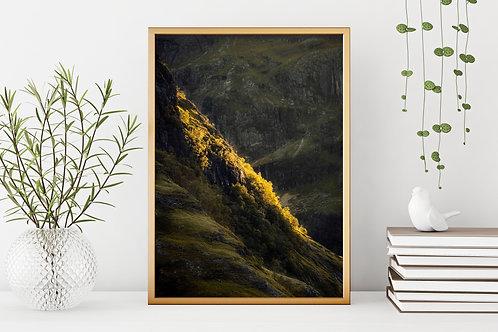 Golden Trees Print