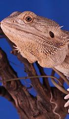 reptile-pod-448673-unsplash.jpg