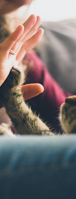 jonas-vincent-2717-cat high five.jpg