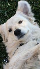 dayson-moore-430122-dog on back.jpg