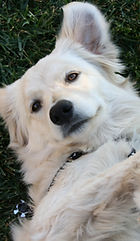 dayson-moore-430122-dog on back.jpg