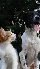 anusha-barwa-428445-dog with cat.jpg