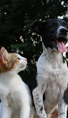 anusha-barwa-428445-dog with cat.jpg
