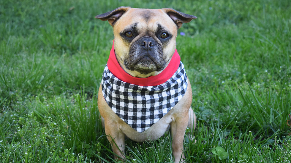Red and Gingham Bandana