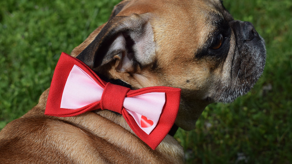 Love is in the Air Bow Tie