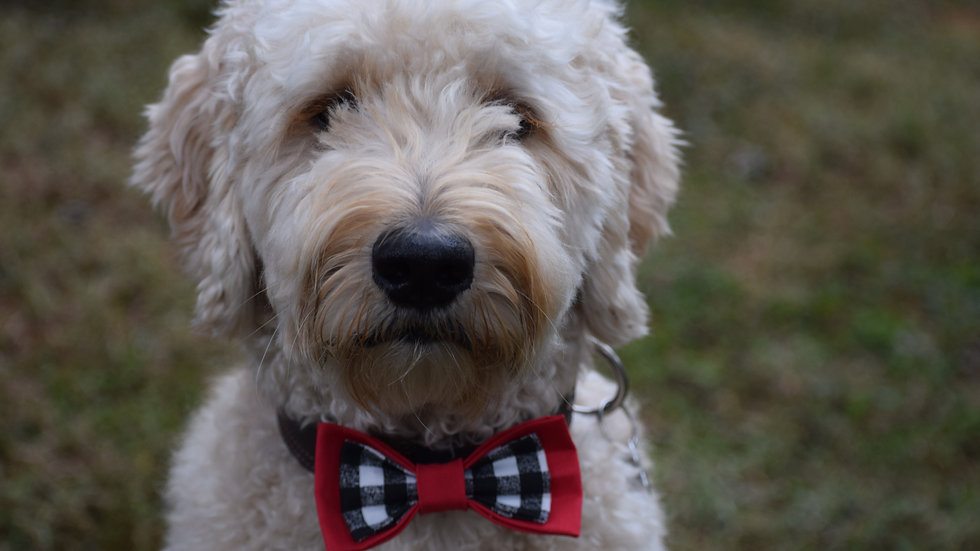 Red and Gingham Bow Tie