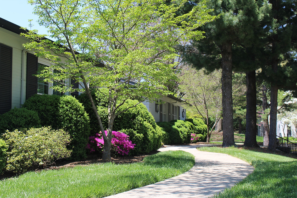 walkway along landscaped bed with boxwoods