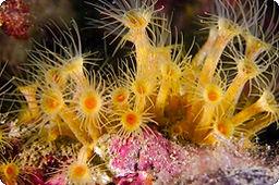 underwater_ecology.jpg