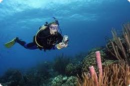 underwater_photography.jpg