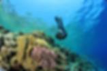 scuba_diver.png