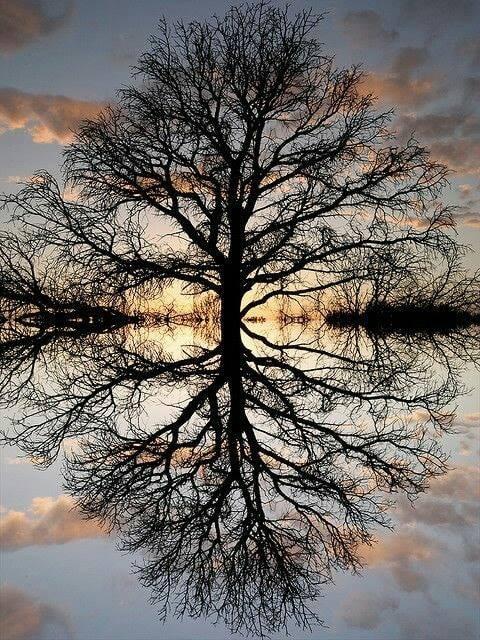 TREE reflection.jpg