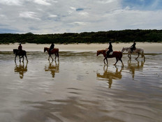 2. Catlins Horse Riding