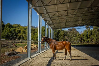 Enclosed-horse-arena.jpg