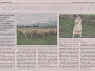 Farmers need to adapt crossbred wools Pt2