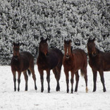 Fillies in the snow