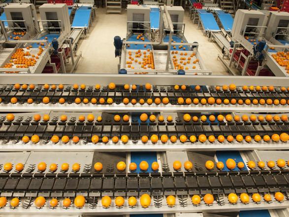 Horticulture & Food Processing - Prospec Structures