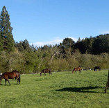 Mares at Cemetery Block