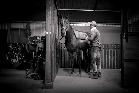 Equine Photography by Natwick (44).jpg