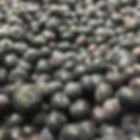 Blueberries availale in one kilogram or bulk cartons.