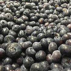 Blueberries availale in one kilogram or bulk cartons.