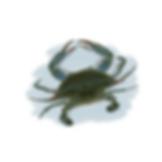 Siri Livro Criaturas da Barra - Fran Caye.png