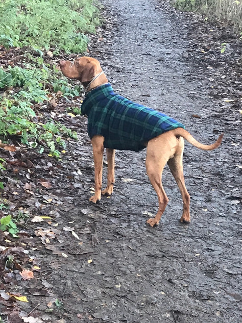 Black Watch Tartan Fleece Dog Coat
