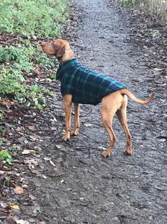 Black Watch Tartan Fleece Dog Coat