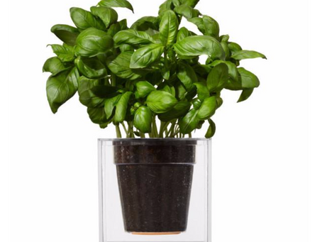 TOP 3 PLANTERS FOR PLANT LOVING GLOBETROTTERS