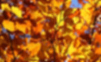 FALL LEAVES 5.jpg