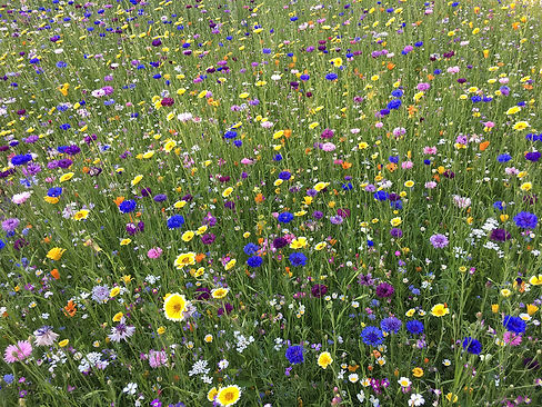 MEL-image-flowers.jpg