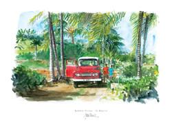 Bambous Virieux - Ile Maurice