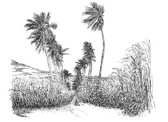 Le Bol - Saint Louis - La Réunion