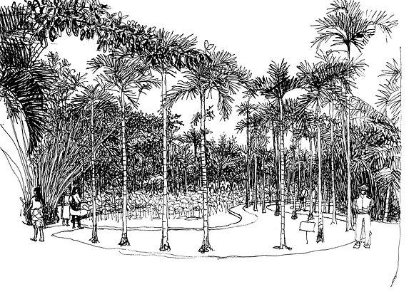 Jardin des Pamplemousses - Ile Maurice